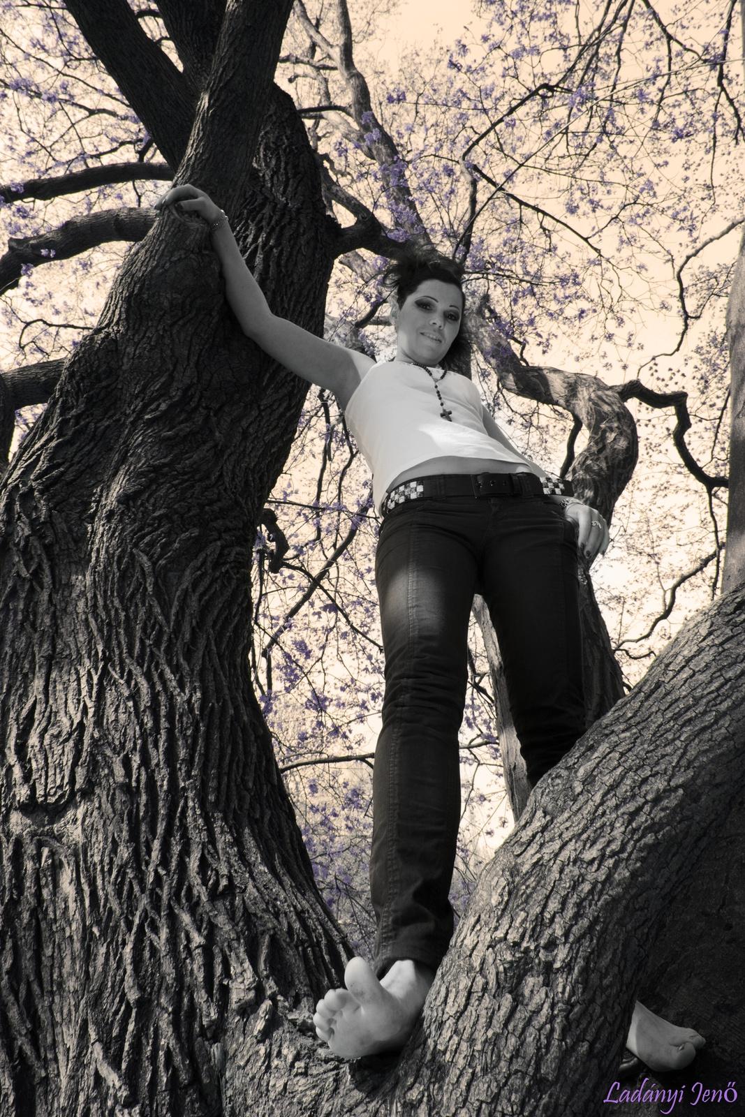 Fent a fán