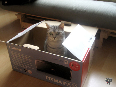 geszter: cica