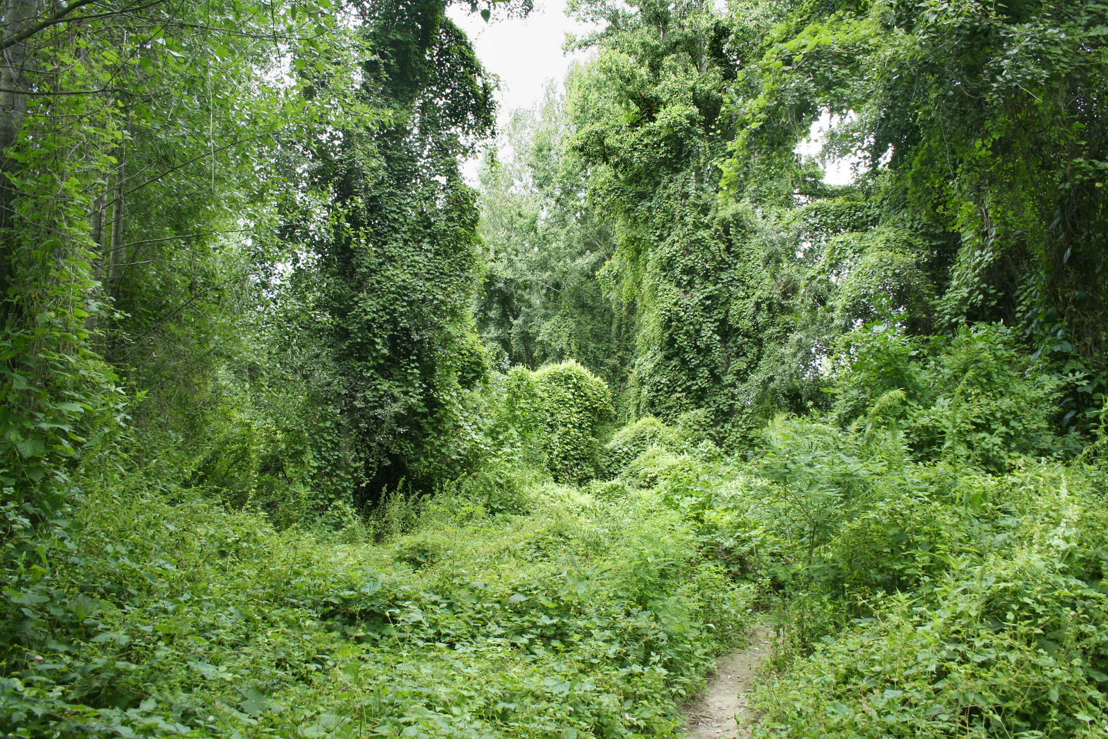 Árteri erdő Szeged közelében